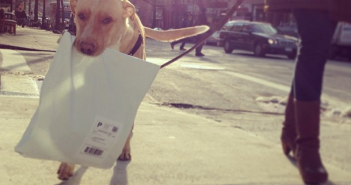 Maildog by fosterdogsnyc on Instagram