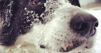 Snow Dog by jenniferhelm on Instagram