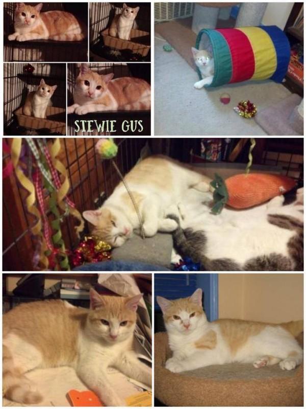 Stewie the cat via K9Kastle