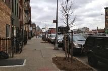 New Street Trees on 4th Avenue