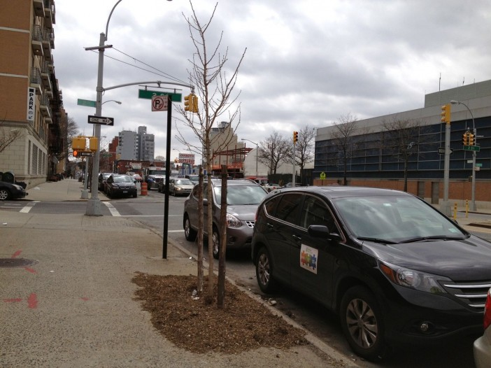 New Street Trees on 4th Avenue