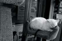 Cat Nap at Pet Boutique and Supplies